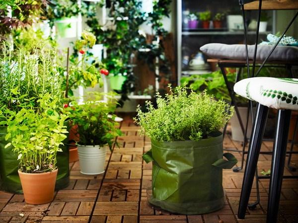 Vườn rau hữu cơ trong tiểu cảnh ban công đẹp